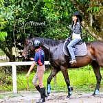 AS Equestrian Centre