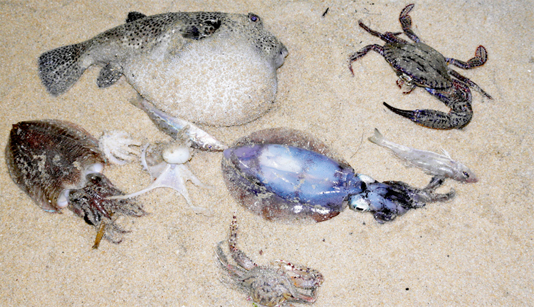Some of the daily catch from the beach-netting activity