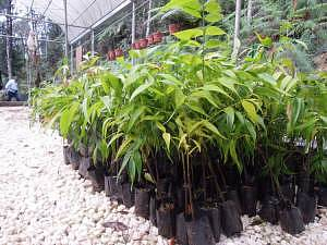 sorr - example of what Tree Saplings (Baby Tree) look like. Teams will be bringing it up throughout the race and pass a few challenge booths