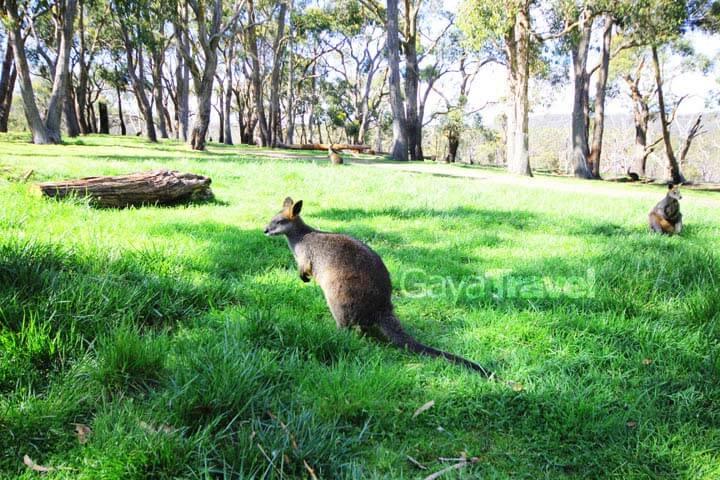 Island Breeze Kangaroo Island