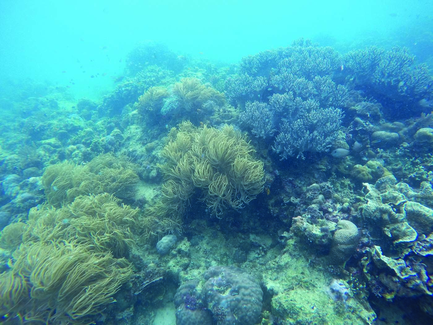 Mabul and sipadan island gaya travel - Sipadan dive sites ...