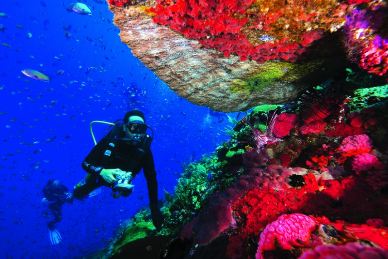 A diver looks on to a couple of lion fishes taking shelter under the coral reef at Crystal Rock dive site, Komodo National Park