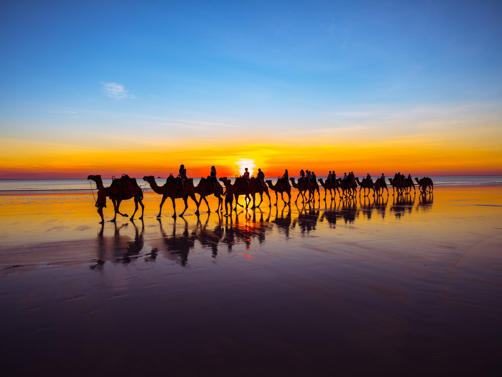 Camels on Cable Beach (2)