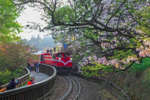 7 BEAUTIFUL CHERRY BLOSSOM SPOTS YOU WON'T WANT TO MISS THIS SPRING 2019