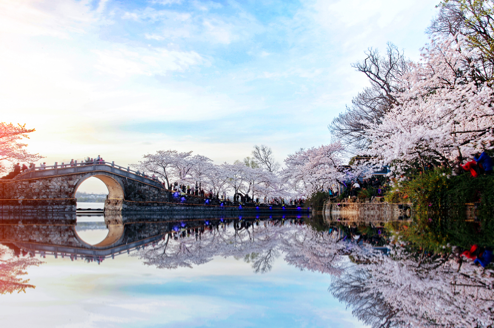 7 Beautiful Cherry Blossom Spot You Won't Want To Miss This Spring 2019