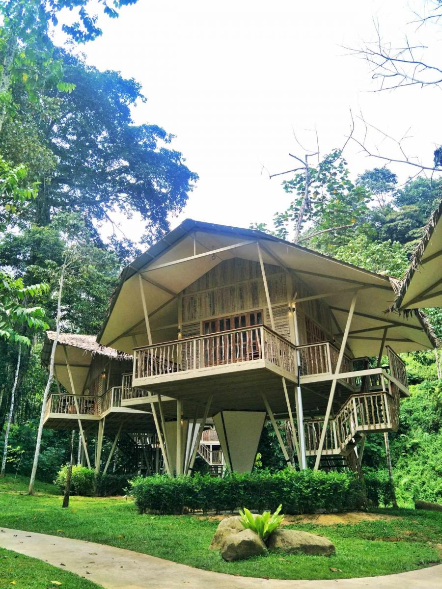 Ficus Treetop Villa
